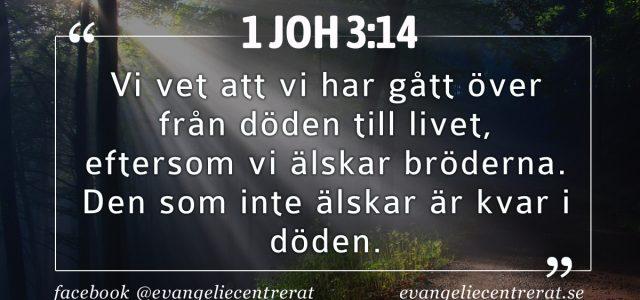 Första Johannesbrevet 3:14