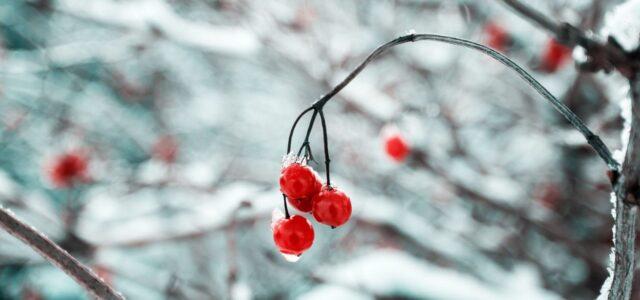 Se fram emot en bättre jul